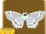 European Mother of Pearl Moth