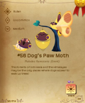 Dog's Paw Moth§Flutterpedia