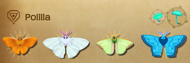 Polilla Set§Flutterpedia