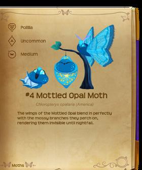 Mottled Opal Moth§Flutterpedia