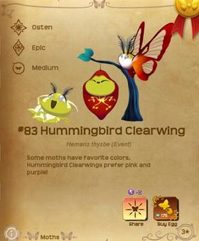 Hummingbird Clearwing§Flutterpedia