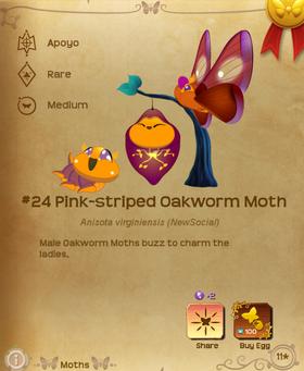 Pink-striped Oakworm Moth§Flutterpedia