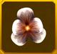 Hanwi Set§AF5 20%