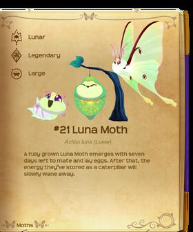 Luna Moth§Flutterpedia