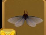 Lygodium Spider Moth
