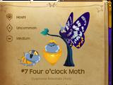 Four o'clock Moth