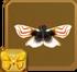 Lygodium Spider Moth§Headericon