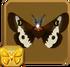 Eastern Buckmoth§Headericon