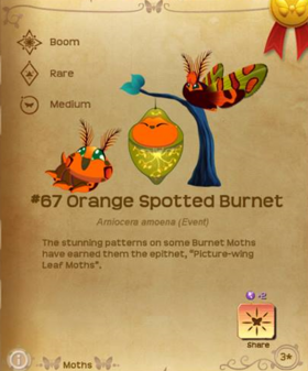 Orange Spotted Burnet§Flutterpedia