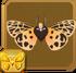 Virgin Tiger Moth§Headericon