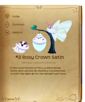 Rosy Crown Satin§Flutterpedia