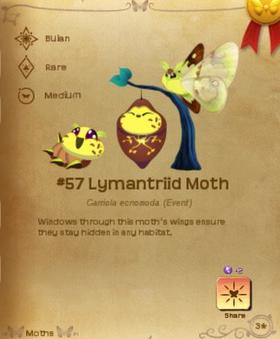 Lymantriid Moth§Flutterpedia