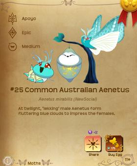 Common Australian Aenetus§Flutterpedia