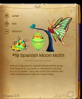 Spanish Moon Moth§Flutterpedia