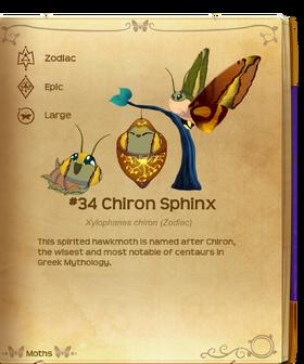 Chiron Sphinx§Flutterpedia