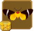 Phileta Tiger Moth§Headericon