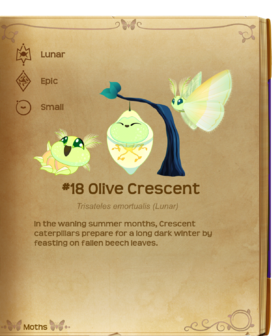 Olive Crescent§Flutterpedia