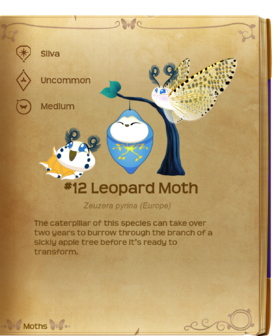 Leopard Moth§Flutterpedia