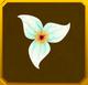 Hanwi Set§AF2 10%