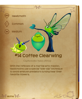 Coffee Clearwing§Flutterpedia