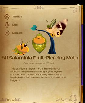 Salaminia Fruit-Piercing Moth§Flutterpedia