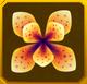 Hanwi Set§AF3 50%