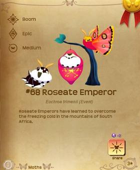 Roseate Emperor§Flutterpedia