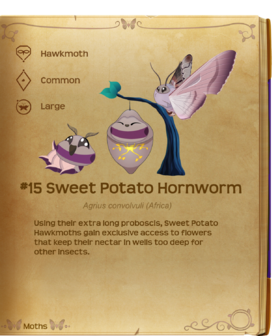 Sweet Potato Hornworm§Flutterpedia