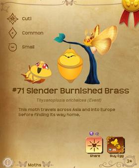 Slender Burnished Brass§Flutterpedia