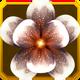 Hanwi Set§AF5 100%