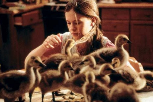 Fly Away Home Wiki