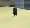 150px-Barn owl