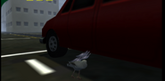 A car hitting a seagull