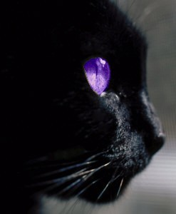 Are Purple Eyed Cats Real