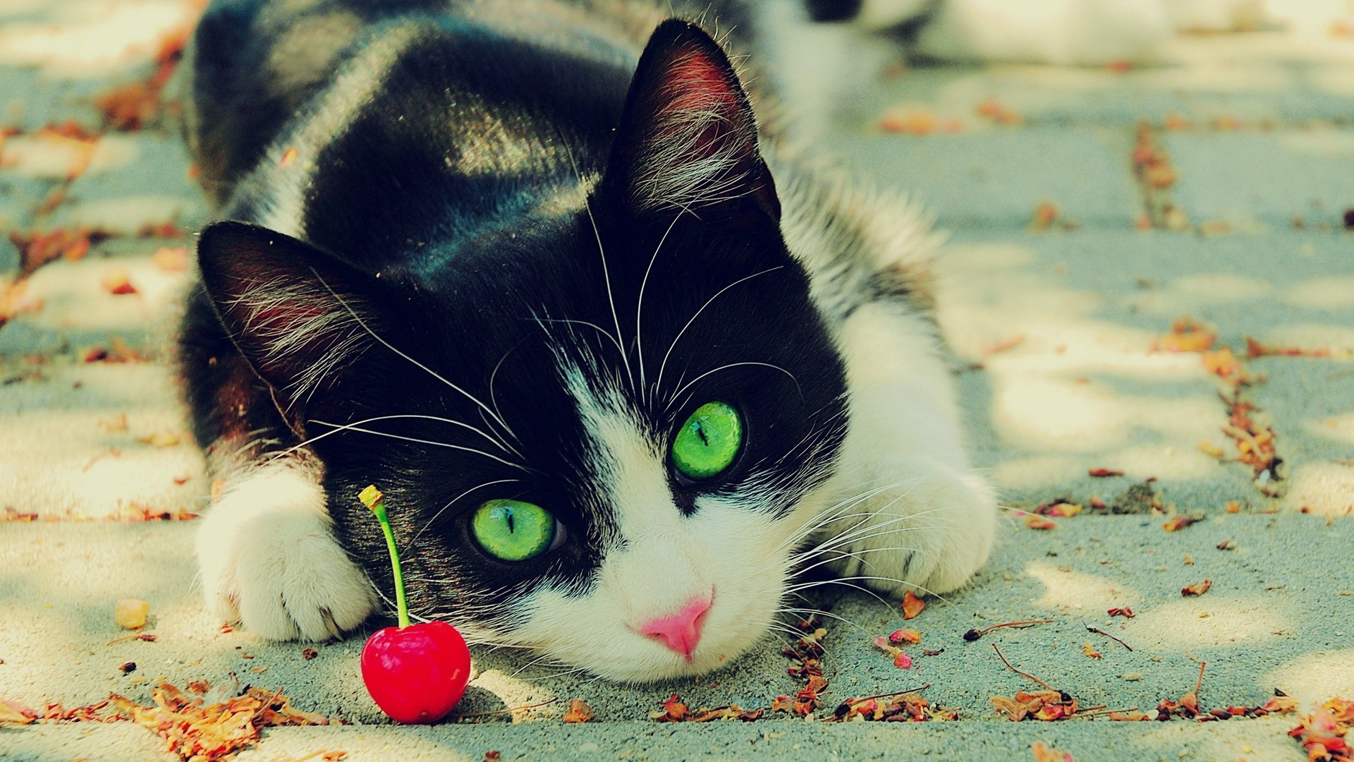 Black And White Cat With Green Eyes Picture HD Wallpaper
