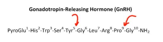 Gonadotropin relesing hormone cleavage