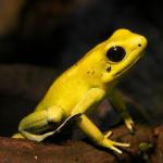 FroggerBotAvatar