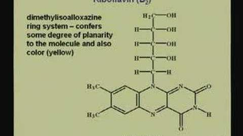 Lecture - 19 Vitamins and Coenzymes II