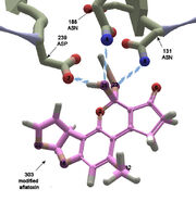 Aflatoxin Bonding 1