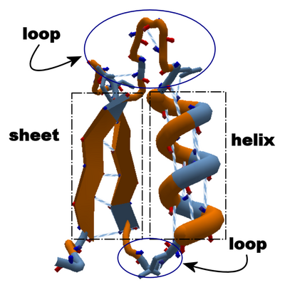 Helix Loop Sheet