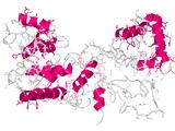 CRISPR-Cas Transposase