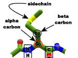 Alpha carbon