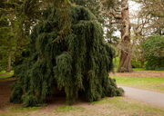 Krynoid bush Kew