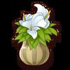 Souvenir-Potted Lily
