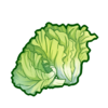 Ingredient-Lettuce
