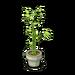 Furniture-Jade Spring