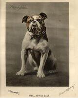 Handsome Dan 1890