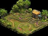 Terrace Farm