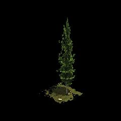 Przykład dekoracji [[Cyprys