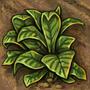 Plantations (tech)